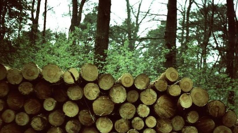 Nachhaltigkeit: Holz für's gute Gewissen