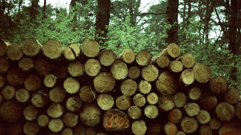 Nachhaltigkeit: Öko-Holz-Zertifikate sind auf dem Vormarsch