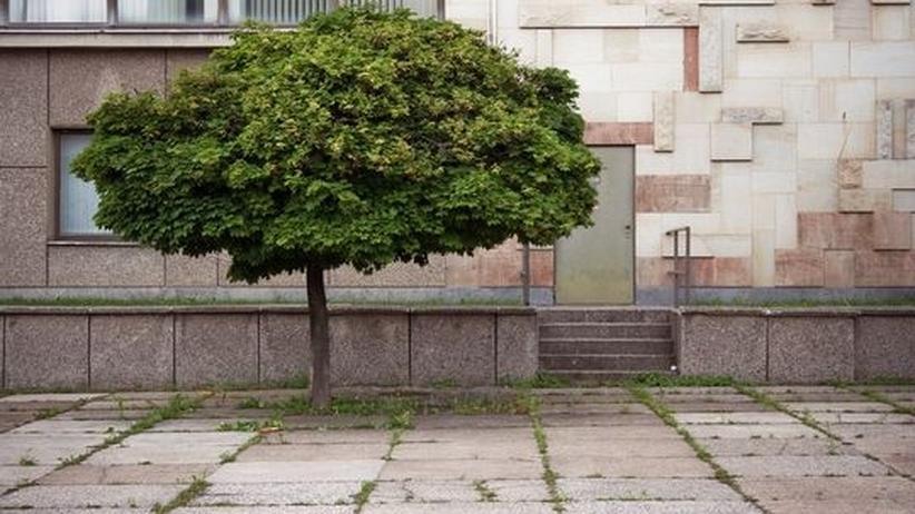 Baumfällsaison: In der sich ausbreitenden und modernen Stadt ist selten Platz für alte Bäume.