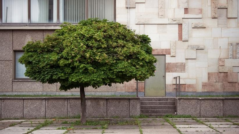Baumfällsaison: Wenn Bäume der Stadt im Weg stehen