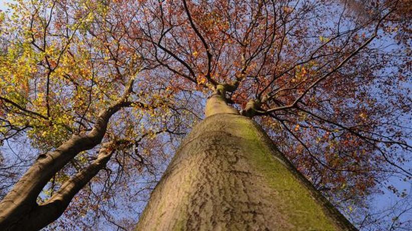 Wald Baum Bäume
