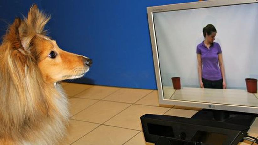 Kognitive Fähigkeiten: Hunde sind ähnlich kommunikativ wie Kleinkinder