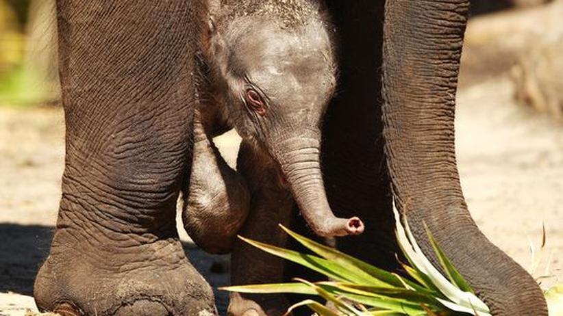 Feuer in Australien: Elefanten als Brandbekämpfer sind Unsinn
