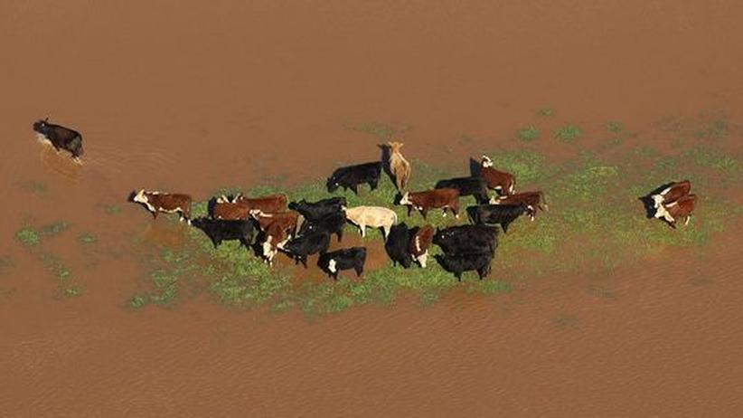Outback im Wandel: Nach Jahren der Dürre schöpfen Australiens Farmer Hoffnung