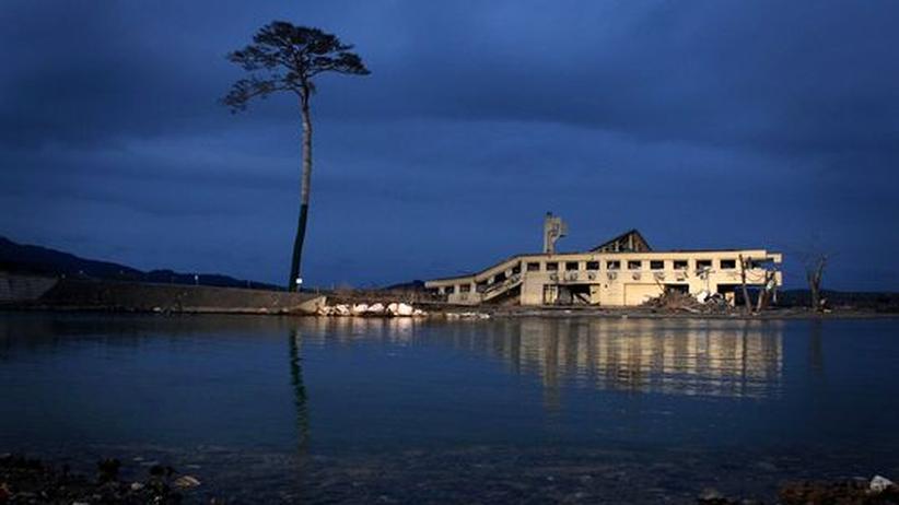 Ein einziger Baum hielt am 11. März 2011 in der Hafenstadt Rikuzentakata dem Tsunami stand. Heute ist der Schutt abgetragen, weite Flächen der ehemaligen Stadt liegen brach.