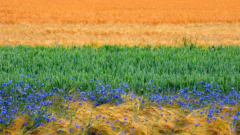 Bioprodukte: Hat die Natur etwas von Ökolandbau?