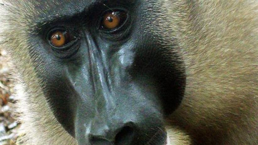 Abholzung in Kamerun: Forscher kämpfen gegen Palmölplantage