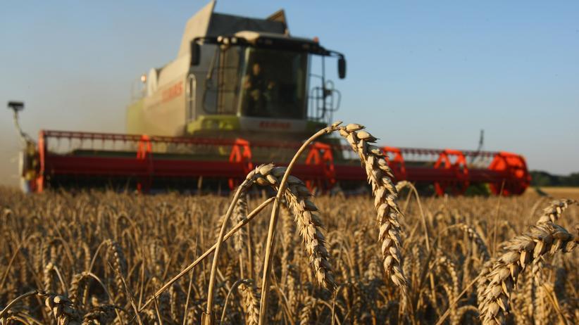 Grüne Gentechnik: Es fehlt der Masterplan für eine nachhaltige Landnutzung