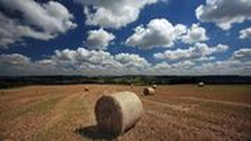Auf ZEIT ONLINE schreiben führende Agrar-Experten über Chancen und Risiken der Grünen Gentechnik