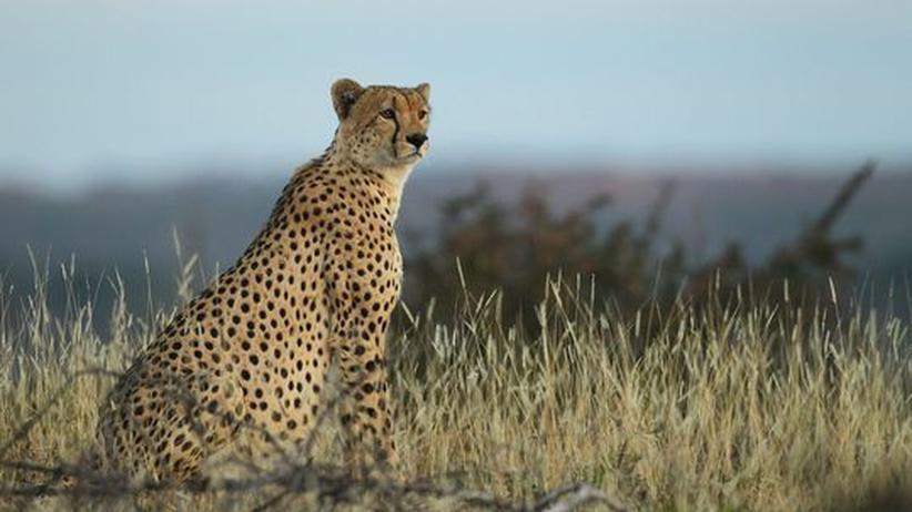 Masai Mara: Lasst die Wildnis leben