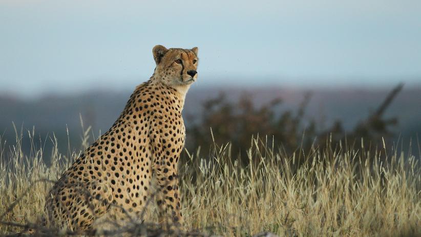 Masai Mara: Hunger und Durst des Menschen vertreiben Afrikas Wildnis