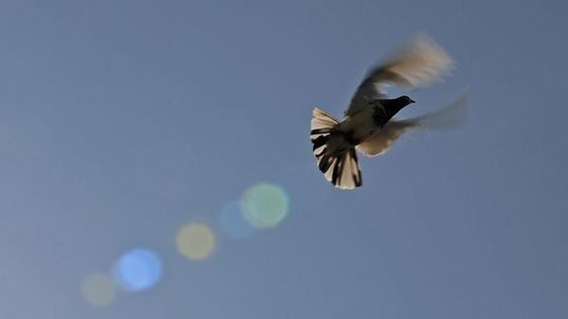 Magnetsinn: Neuronales Navigationssystem der Taube abgehört