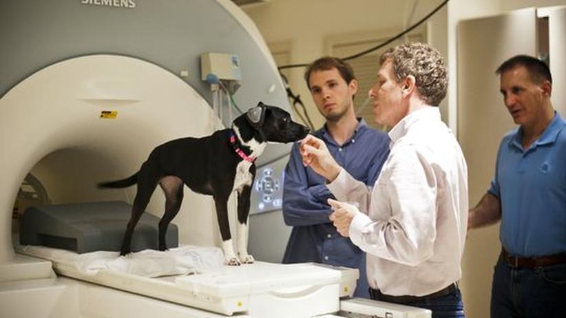 Tierforschung: Die Spur der Wurst