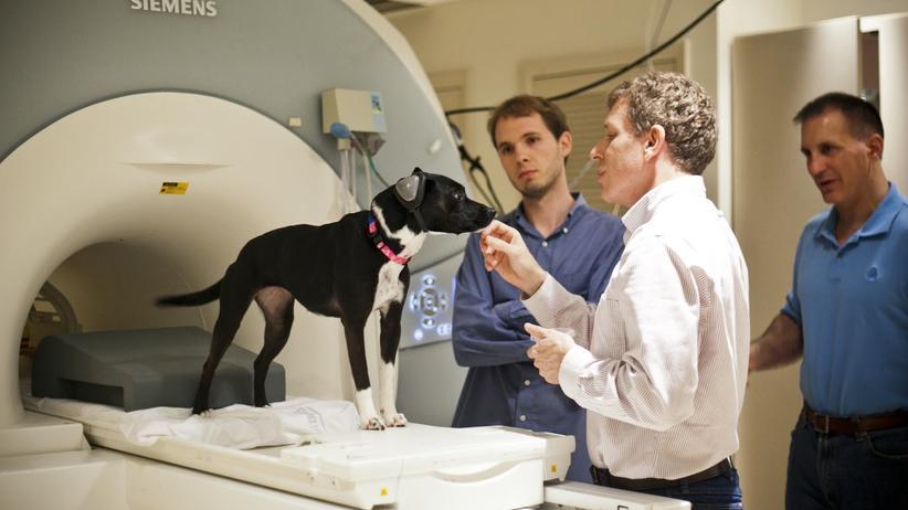 Tierforschung: Gedankenlesen im Hundehirn