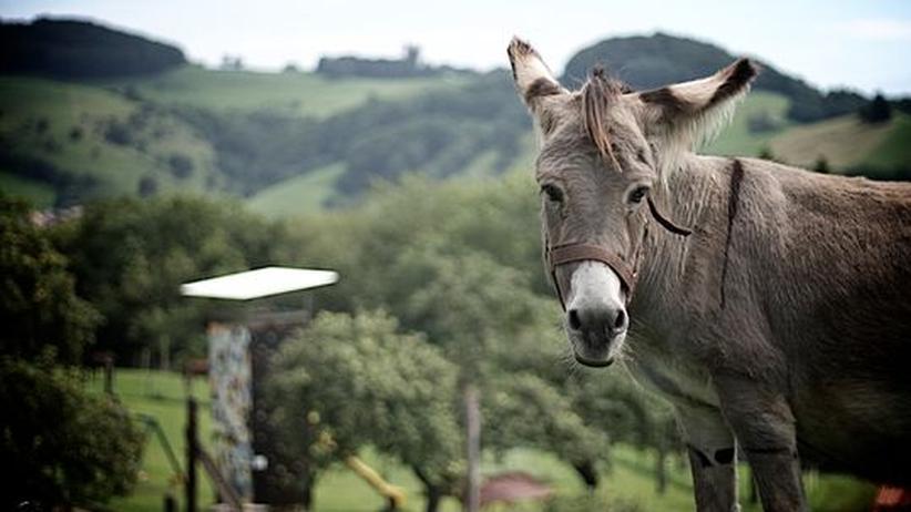 Agrarsubventionen: Der Esel in der Politik