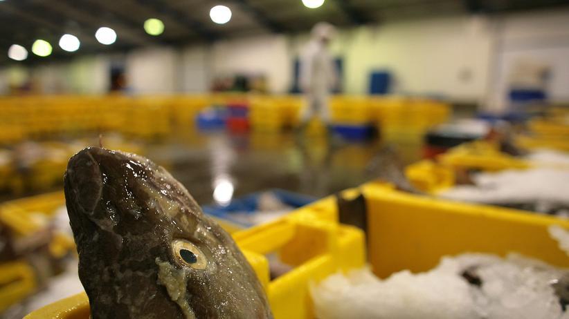 Fischerei: Leere Meere, volle Teller