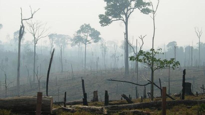 Umweltschäden: Das Artensterben im Amazonas lässt auf sich warten