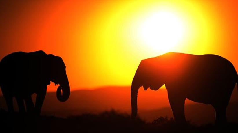Lauterzeugung: Elefanten unterhalten sich im Flüsterton
