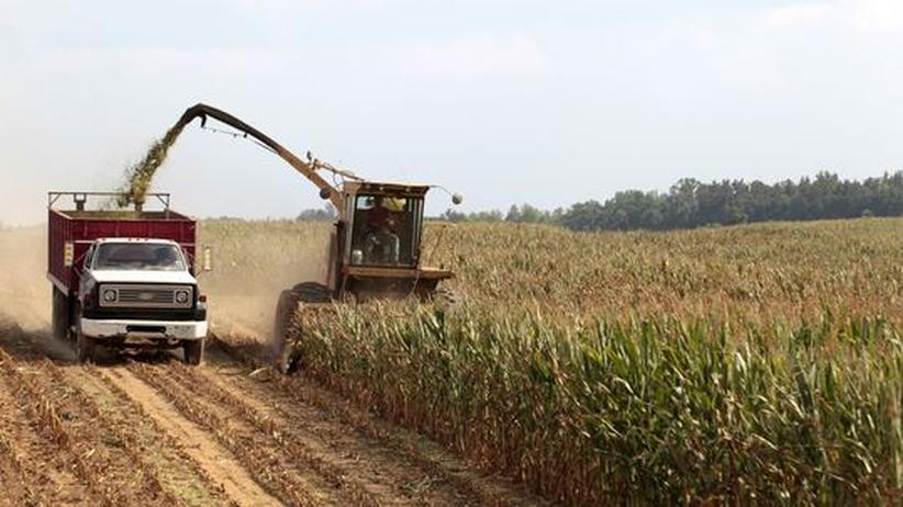 Lebensmittel: Rekordhitze verursacht Ernteausfälle in den USA