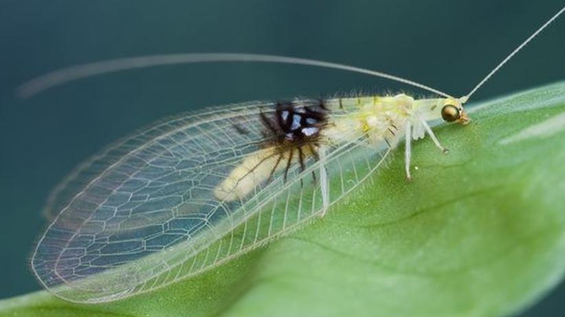 Biologie: Flickr-Fliege entpuppt sich als neue Art