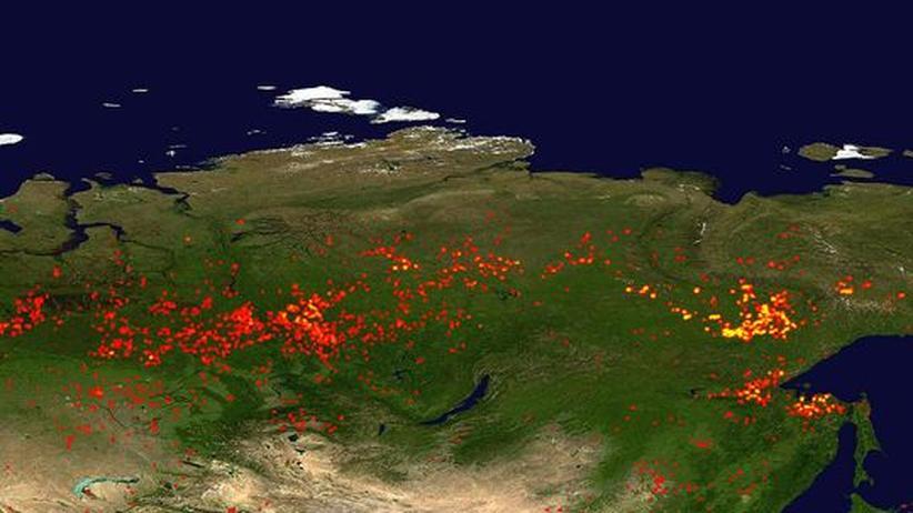 "Feuer in Sibirien: ""Intakte Moore können Waldbrände in Russland verhindern"""
