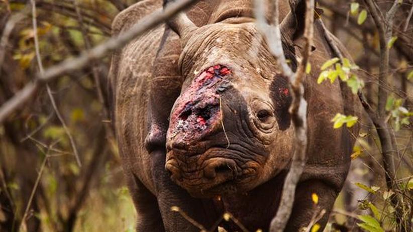 Südafrika: Krieg im Busch