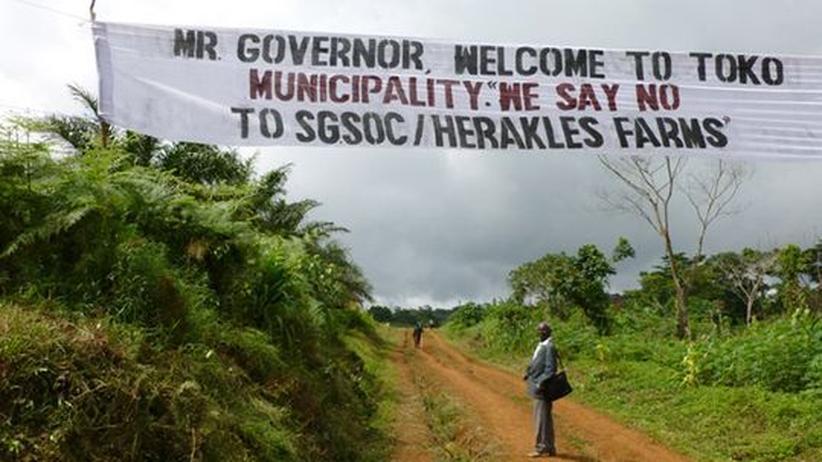 Regenwald: US-Konzern scheitert mit Öko-Stempel für Palmöl