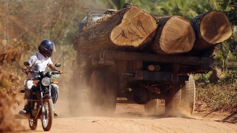 Umweltzerstörung: Abholzen der Regenwälder trocknet die Tropen zusätzlich aus