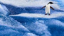 Ein Pinguin auf einer Eisfläche in der Antarktis