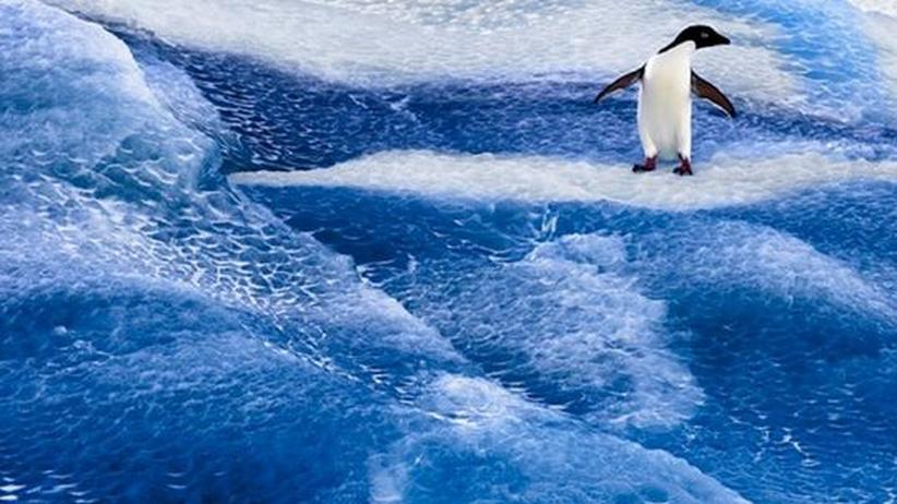 Artenvielfalt: Kein Schutz für die Meere der Antarktis