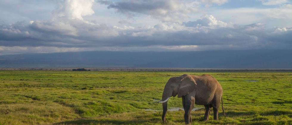 Amboseli-Nationalpark Elefant Kenia