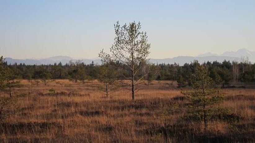 Naturschutz: Das Naturschutzgebiet Ibmer Moor im Innviertel in Oberösterreich