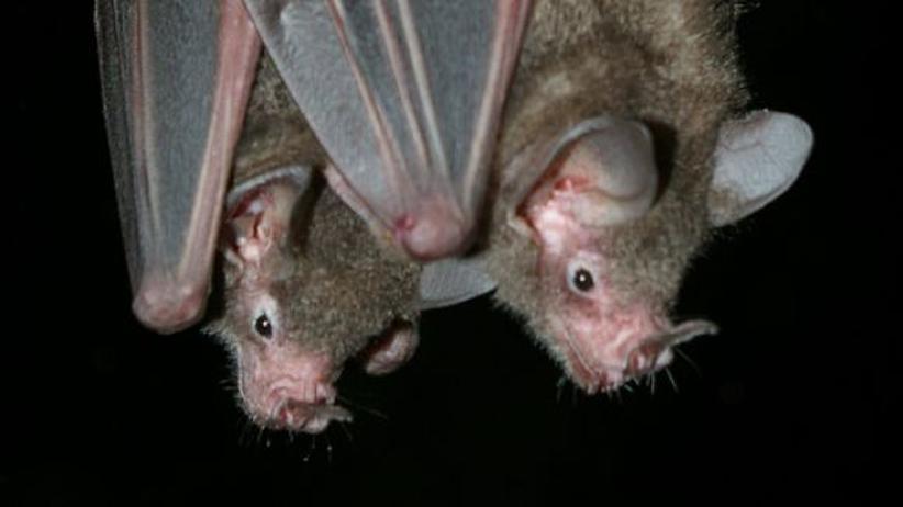 Lichtverschmutzung: Stadtlicht vertreibt Fledermäuse