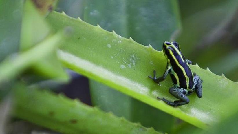 Klimawandel: So schnell kippt kein Regenwald um