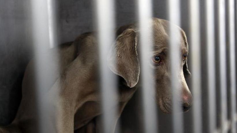 Tierschutz: Schläfert Peta mutwillig Hunde und Katzen ein?