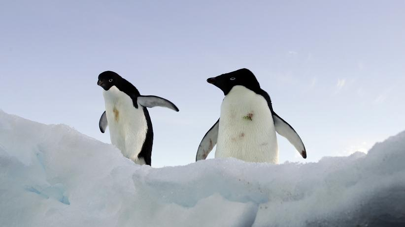 Zwei Pinguine auf dem Eis der Antarktis