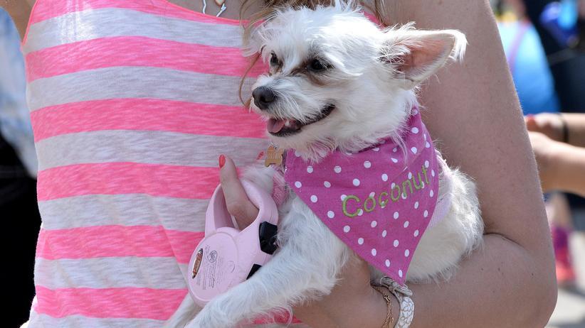 Tierethik Tierrechte Tierschutz Hund Haustier Tierhaltunt