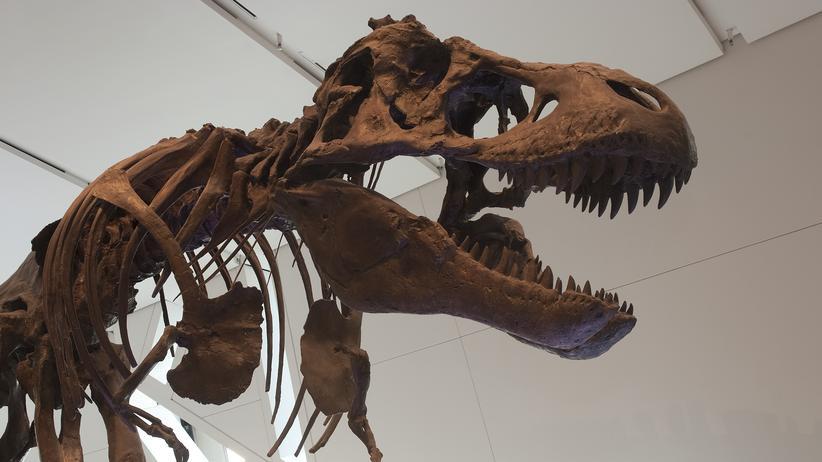 T.rex Evolution Dinosaurier