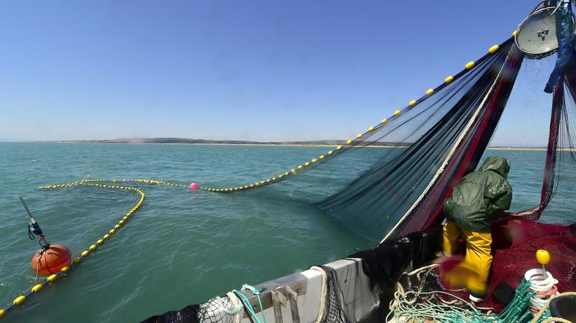 Nachhaltigkeit: Fischbestände im Mittelmeer stark gefährdet