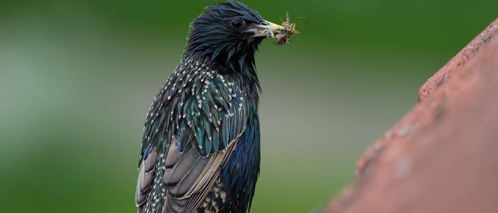 Insektizide: Neonicotinoide lassen Vogelbestände schrumpfen