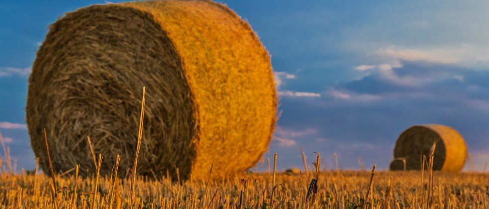 Biokraftstoff: Stroh zu Sprit