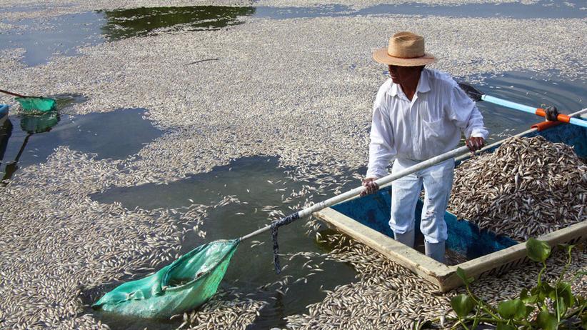 Massensterben: Der See der toten Barsche