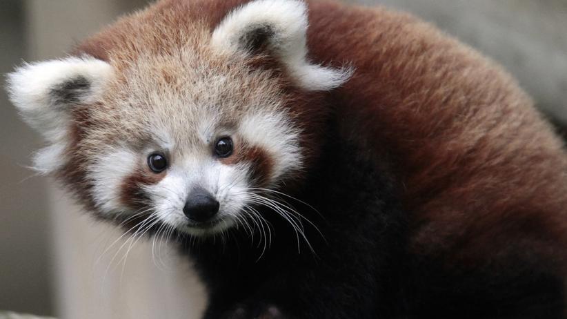 Artenschutz: Letzte Rettung Kindchenschema