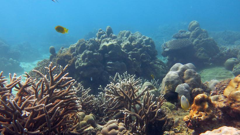 Korallen Riff Seychellen Klimawandel