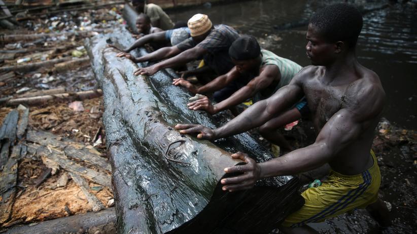 Regenwälder: Arbeiter transportieren Baumstämme aus dem nigerianischen Regenwald.