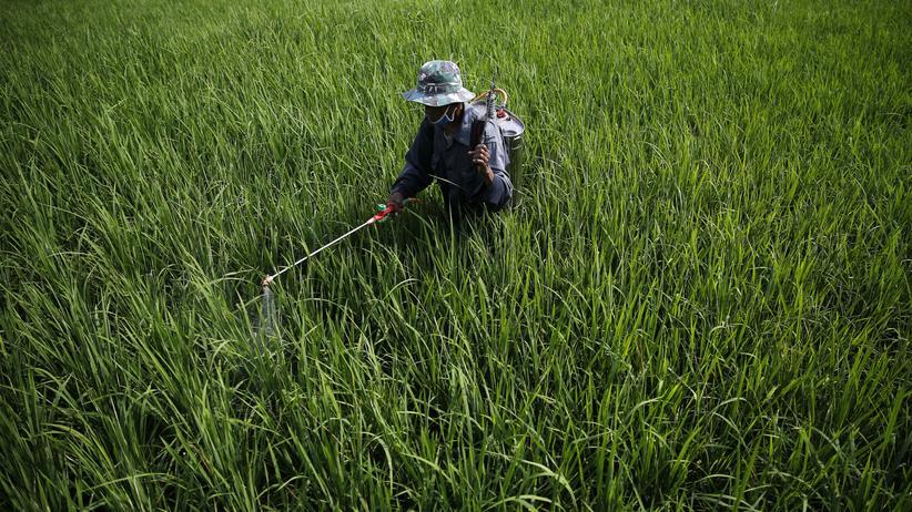 Ökologie: Ein Bauer bringt in Indonesien Pestizide auf ein Feld aus.