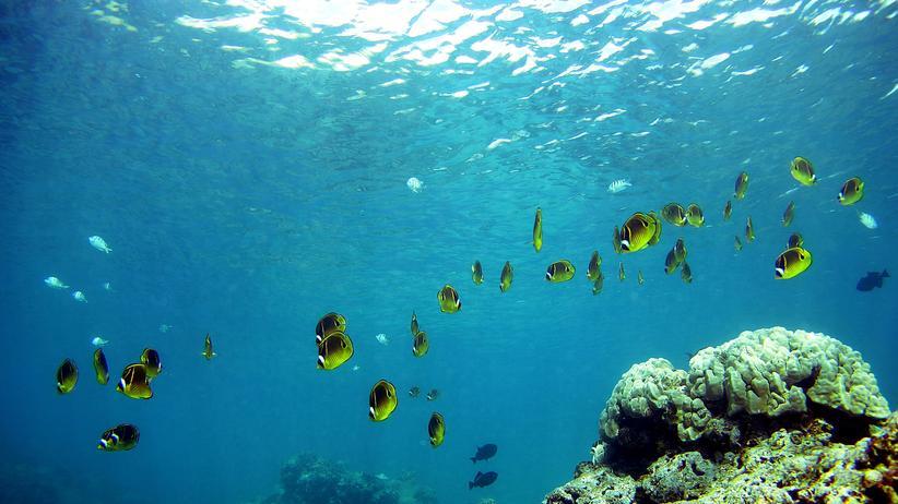 Korallen Riff Klimawandel Umwelt Korallenbleiche Korallensterben
