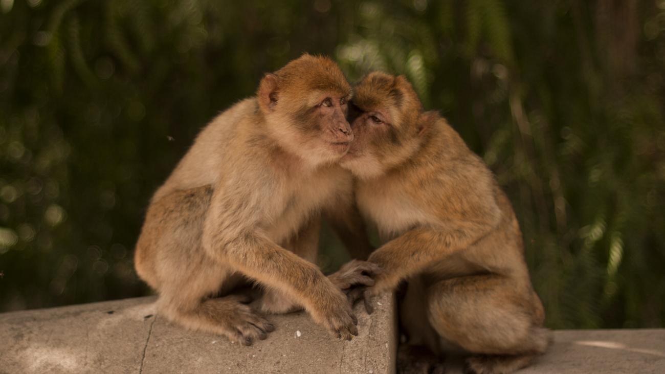 Tierwelt partnersuche