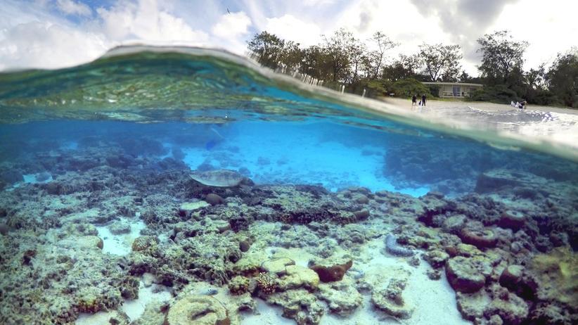 Australien: Great Barrier Reef kommt nicht auf die Rote Liste