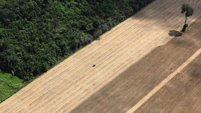 Ziel 15: Umweltschutz an Land: Reich werden lieber ohne Regenwald